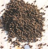 CompostingToronto