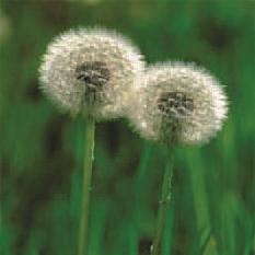 weedstoronto